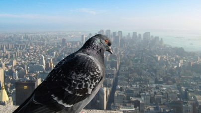 30 Stunning Views You'd Only See If You Were A Bird